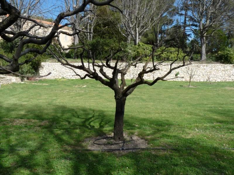 Entretien de jardin en region paca paysagiste pour for Entretien jardin 13
