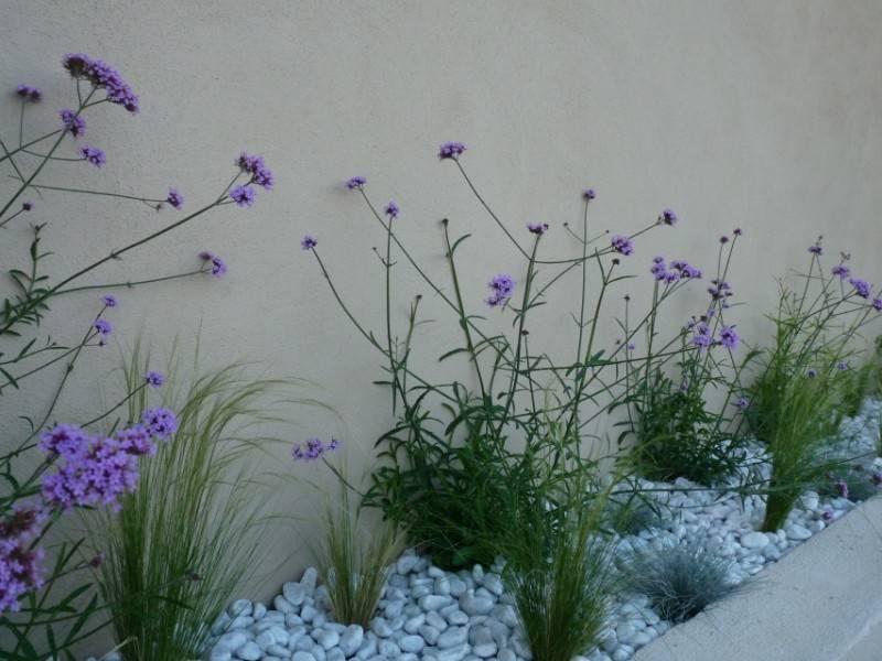 fournitures de v g taux vivaces rosiers arbustes arbres etc pour votre jardin en. Black Bedroom Furniture Sets. Home Design Ideas