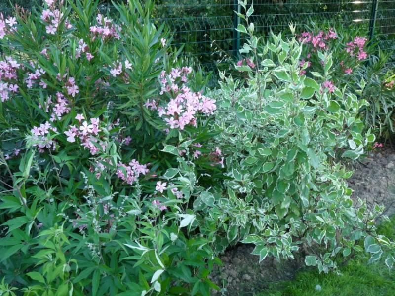 D co petit jardin marseille versailles 29 petit versailles - Petit jardin marseille ...