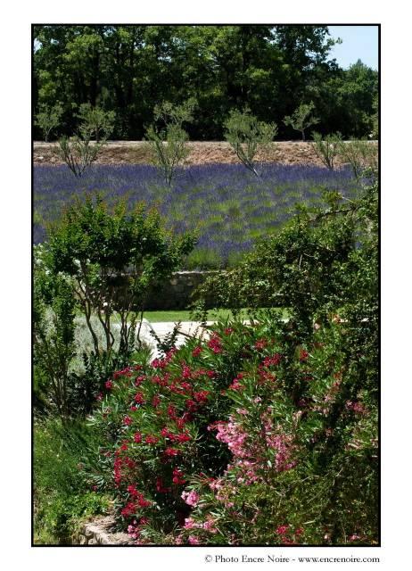 Cr ation et entretien de jardin dans une propri t for Entretien jardin 13
