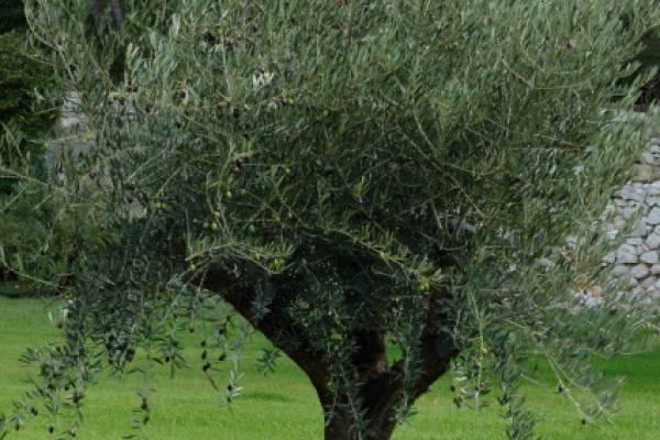 Aménager son jardin sec avec pose de pas japonais Mallemort 13370 ...